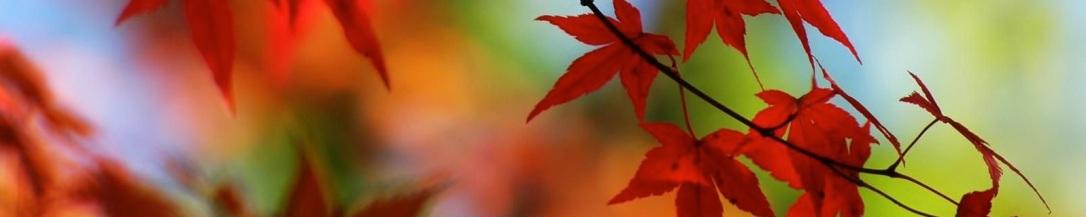 foto-hojas-en-otono